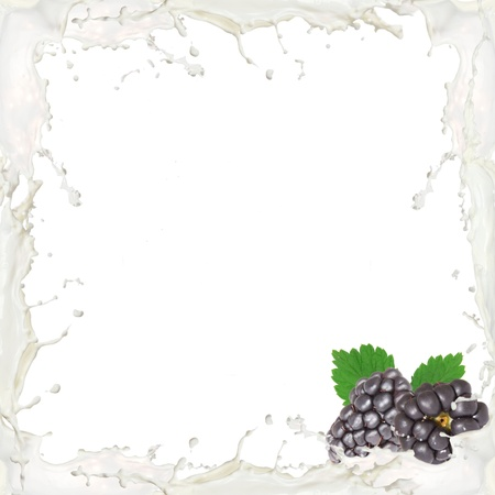 Milk splash frame with blackberries isolated on white photo