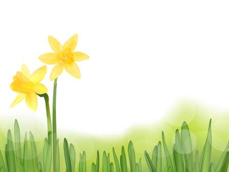Grass with daffodils, vector illustration  イラスト・ベクター素材