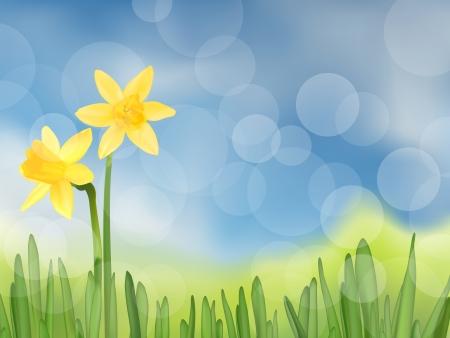 daffodils: Grass with daffodils, vector illustration Illustration