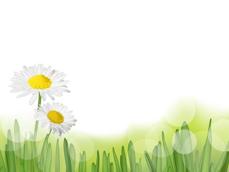 Grass with daisies, vector illustration Stock Vector - 18420733