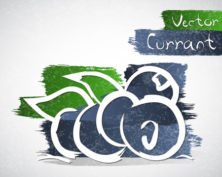 currants: Vector illustration of black currant
