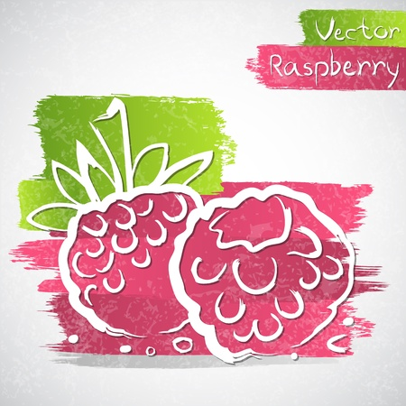 Vector illustration of raspberry with leaves Vector