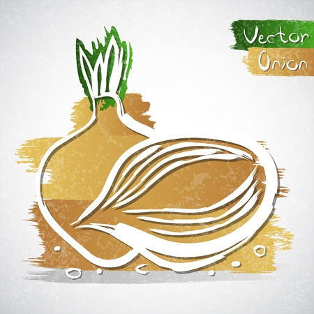 onion slice: Vector illustration of onion with slice