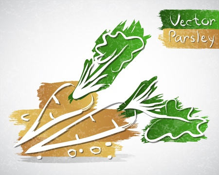 healthful: Vector illustration of parsley with leaves