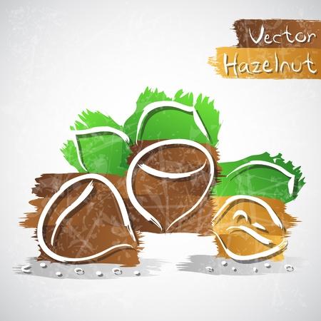 hazelnut: Vector illustration of hazelnuts