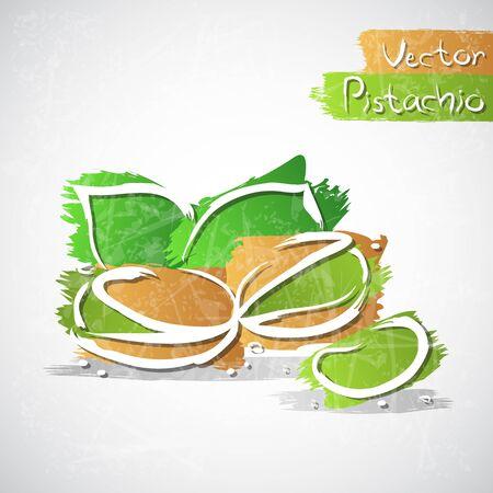 pistachio: Vector illustration of pistachio nuts