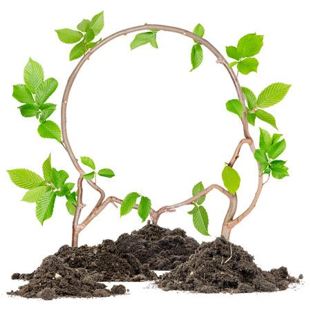 raum weiss: Pflanzen w�chst aus dem Boden Haufen bildenden Kreis mit wei�en Raum Lizenzfreie Bilder