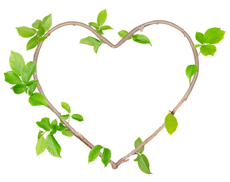 white heart: Plants with leaves forming heart shape isolated on white