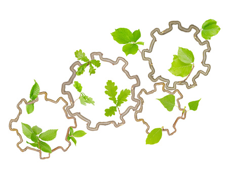 toothe: Plants with leaves forming toothe wheels isolated on white