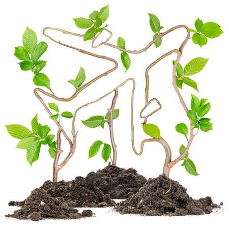 nonpolluting: Plants growing from soil heaps forming airplane Stock Photo