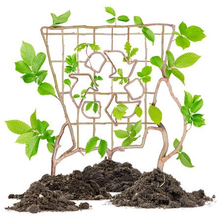papelera de reciclaje: Plantas que crecen de montones de suelo forman bin con el s�mbolo de reciclaje