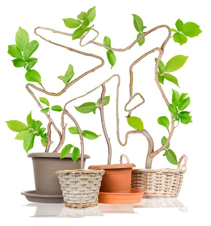nonpolluting: Photo of plants growing from pots forming airplane isolated on white