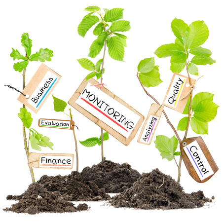 trees services: Photo of plants growing from soil heaps with MONITORING conceptual words written on paper cards