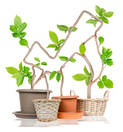acclaim: Photo of plants growing from pots forming positive symbol isolated on white