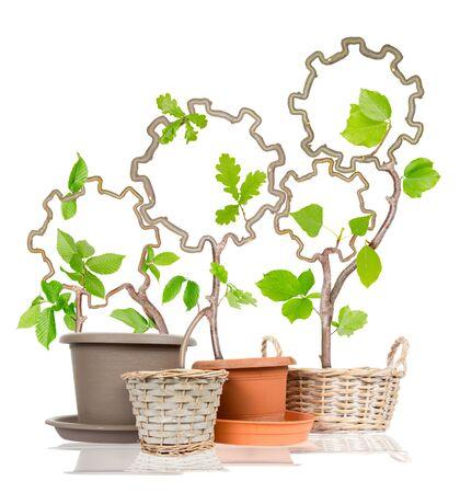 la union hace la fuerza: Foto de las plantas que crecen de ollas que forman las ruedas de dientes aislados en blanco; concepto de trabajo en equipo