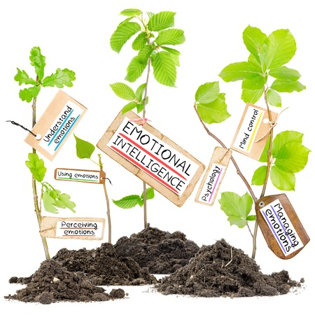 perceive: Photo of plants growing from soil heaps with EMOTIONAL INTELLIGENCE conceptual words written on paper cards