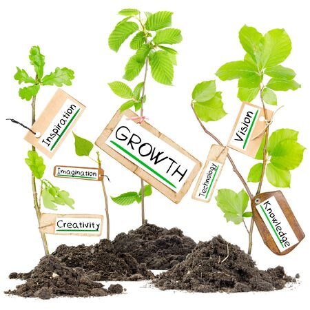 collaborate: Photo of plants growing from soil heaps with GROWTH conceptual words written on paper cards