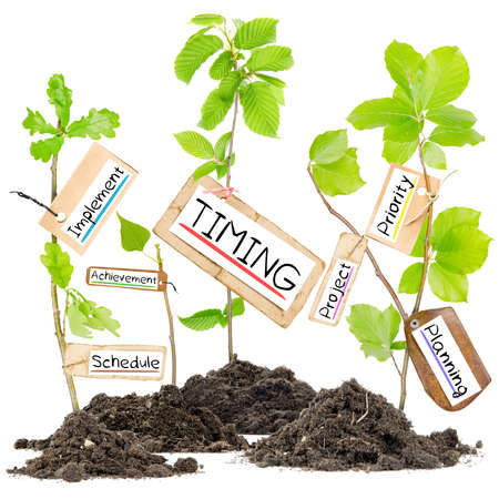 timing: Photo of plants growing from soil heaps with TIMING conceptual words written on paper cards
