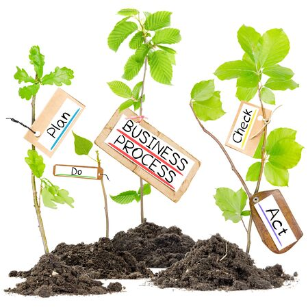 cycle: Photo of plants growing from soil heaps with BUSINESS PROCESS conceptual words written on paper cards Stock Photo