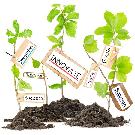 Photo of plants growing from soil heaps with INNOVATE conceptual words written on paper cards