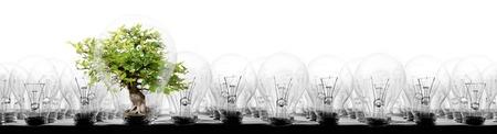 Foto van gloeilampen in rijen met boom op witte achtergrond; concept van ecologie, energiebesparing, opvallen, uniekheid en innovatie Stockfoto