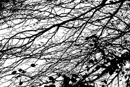 Black and White Cut Out of Branches Stock Photo