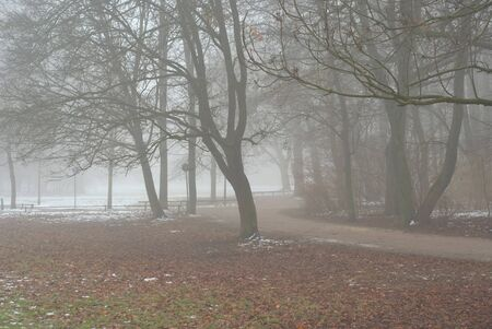 Foggy Lane on an Early Winter Day photo
