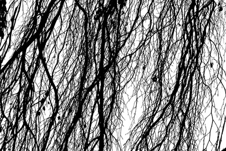 Black and White Photo of Tree Branches as Design Element