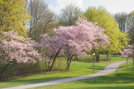 peaceful: Walkway Through Peaceful Spring Scenery with Blossoms Stock Photo