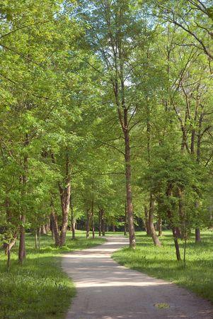 shady: Peaceful Walkway Along a Shady Lane