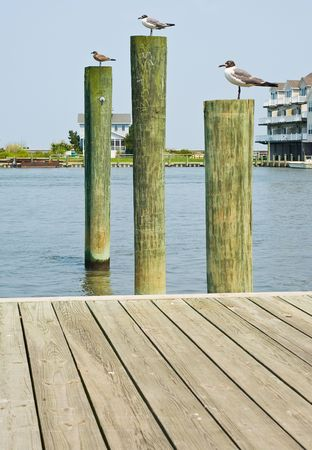 Seagulls on Pilings in Virginia Stock Photo