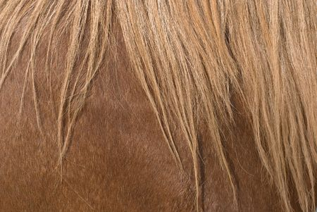 The Mane of a Horse as Design Element
