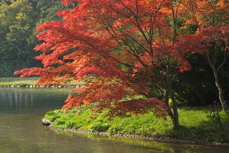 Colorful Foliage On a Bright Autumn Day Stock Photo - 5609735