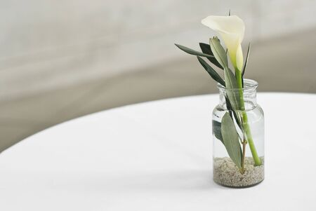 Calla Lily with Leaves in a Vase photo