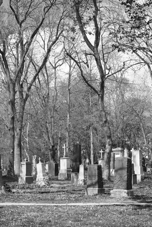 Cemetery in a Wooded Area in Black and White photo