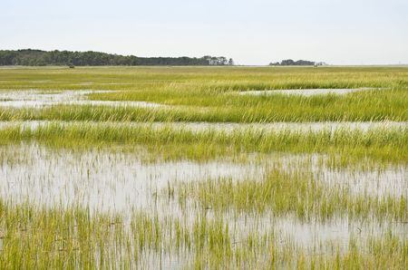 Wetland Conservation at the Virginia National Seashore photo