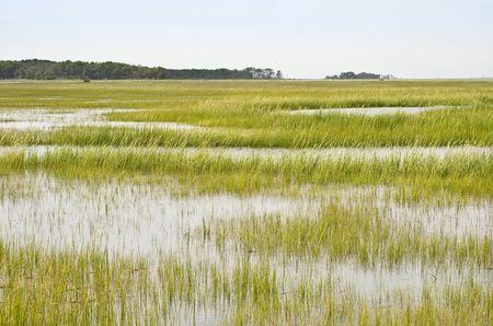 Wetland Conservation at the Virginia National Seashore Stock Photo - 7753073