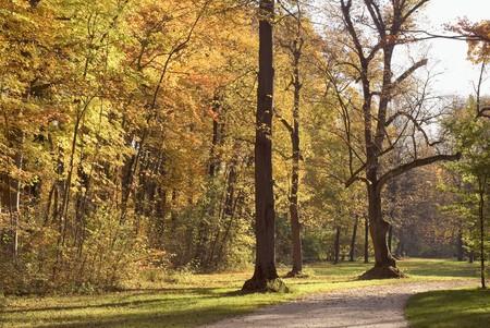 Country Road Through Colorful Autumn Foliage Stock Photo - 8146181