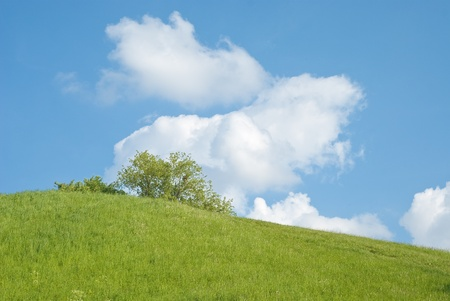 Sunny Summer Landscape with Hill and Meadow photo