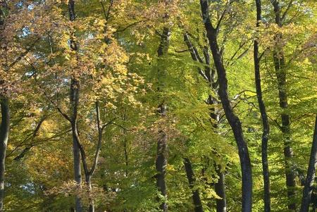 arboles frondosos: Paisaje del árbol pacífica con colores otoñales Foto de archivo