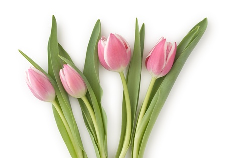 Four Flowering Tulips as Symbol of Romance and Love photo