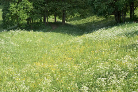 Peaceful Meadow with Wild Flowers in Spring Stock Photo - 13755662