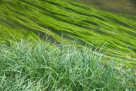 wetland conservation: Wetland Conservation Symbol with Creek and Grass Stock Photo
