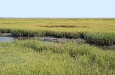 wetland conservation: Wetland Conservation at the Virginia National Seashore