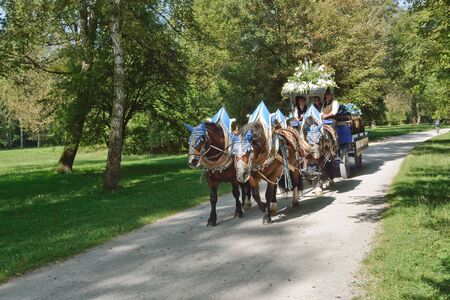 horse drawn: MUNICH, GERMANY – SEPT. 24, 2013: Hofbrau Beer Carriage on Route through the English Garden to the annual Oktoberfest.  The Festival runs from Sept. 21 – Oct. 6  in Munich, Germany