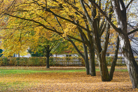 amongst: Country Home Amongst Vibrant Autumn Colors Stock Photo