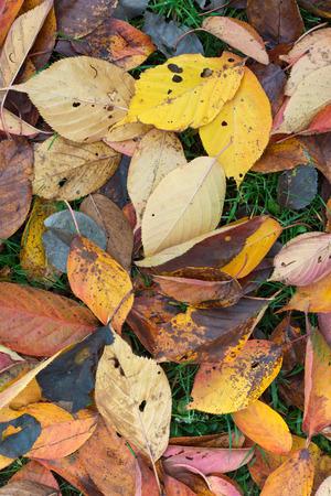 hojas de colores: Hojas de colores en un soleado d�a de oto�o