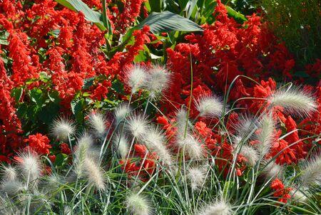 garden fountain: Spring Garden with Close Up of Fountain Grass Stock Photo