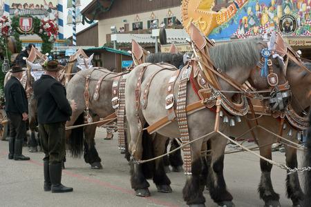 caballo bebe: MUNICH, Alemania - septiembre 20, 2015: Spatenbr�u cerveza carro Entretenedor Multitudes en la Okotoberfest anual. El festival se celebrar� del 19 de septiembre hasta el 04 de octubre 2015 en Munich, Alemania.
