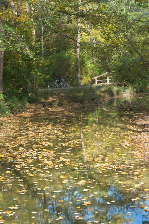 recreational pursuit: Bike Trip Among Autumn Colors as Recreational Pursuit